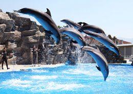 Милые дельфины в дельфинарии Батуми