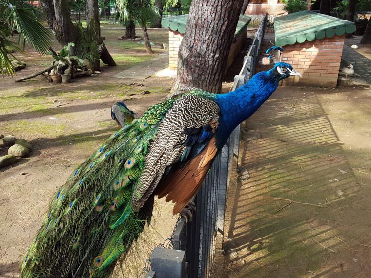Birds in the seaside park