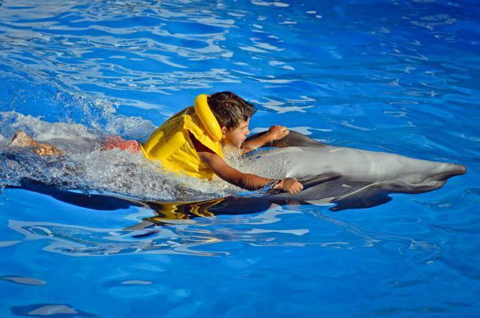 Частные сеансы в Дельфинарии. Источник: fb.ru